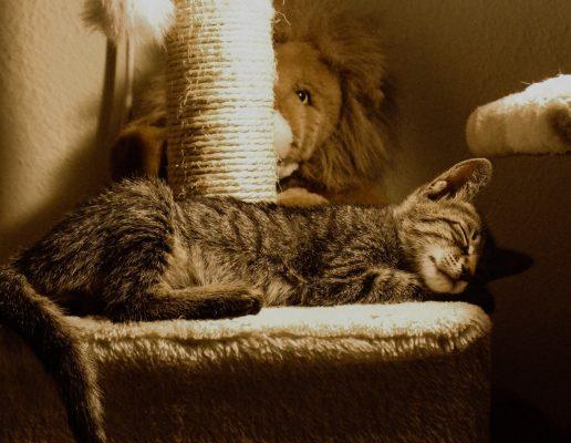ที่นอนแมว